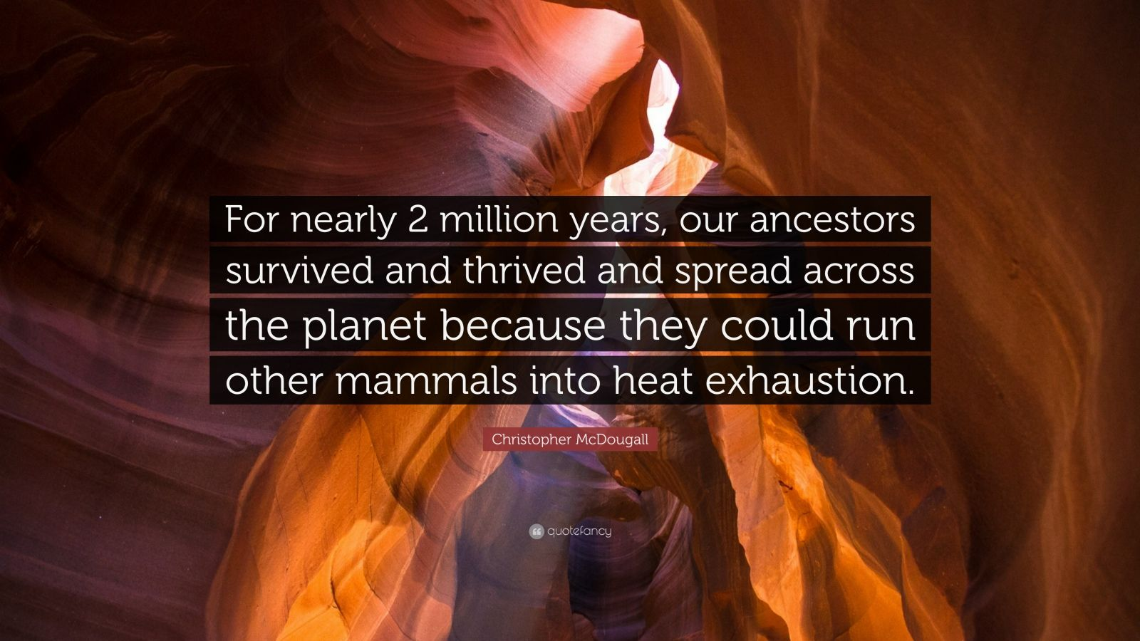"""Christopher McDougall Quote: """"For nearly 2 million years, our ancestors survived and thrived and spread across the planet because they could run other mammals into heat exhaustion."""""""