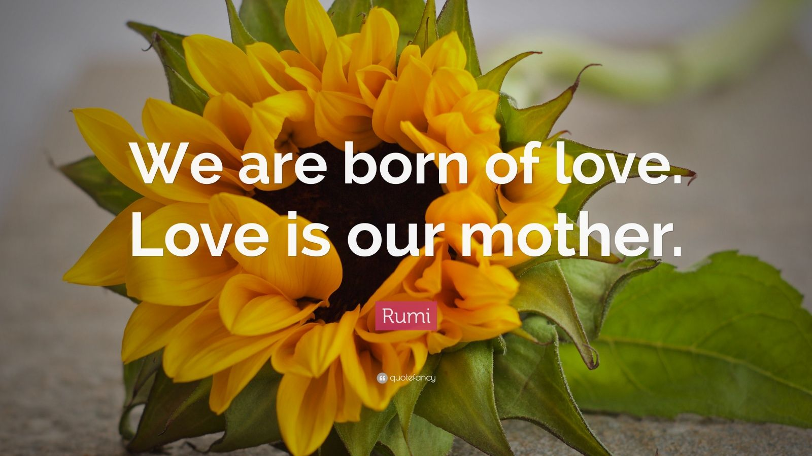 "Rumi Quote: ""We are born of love. Love is our mother."""