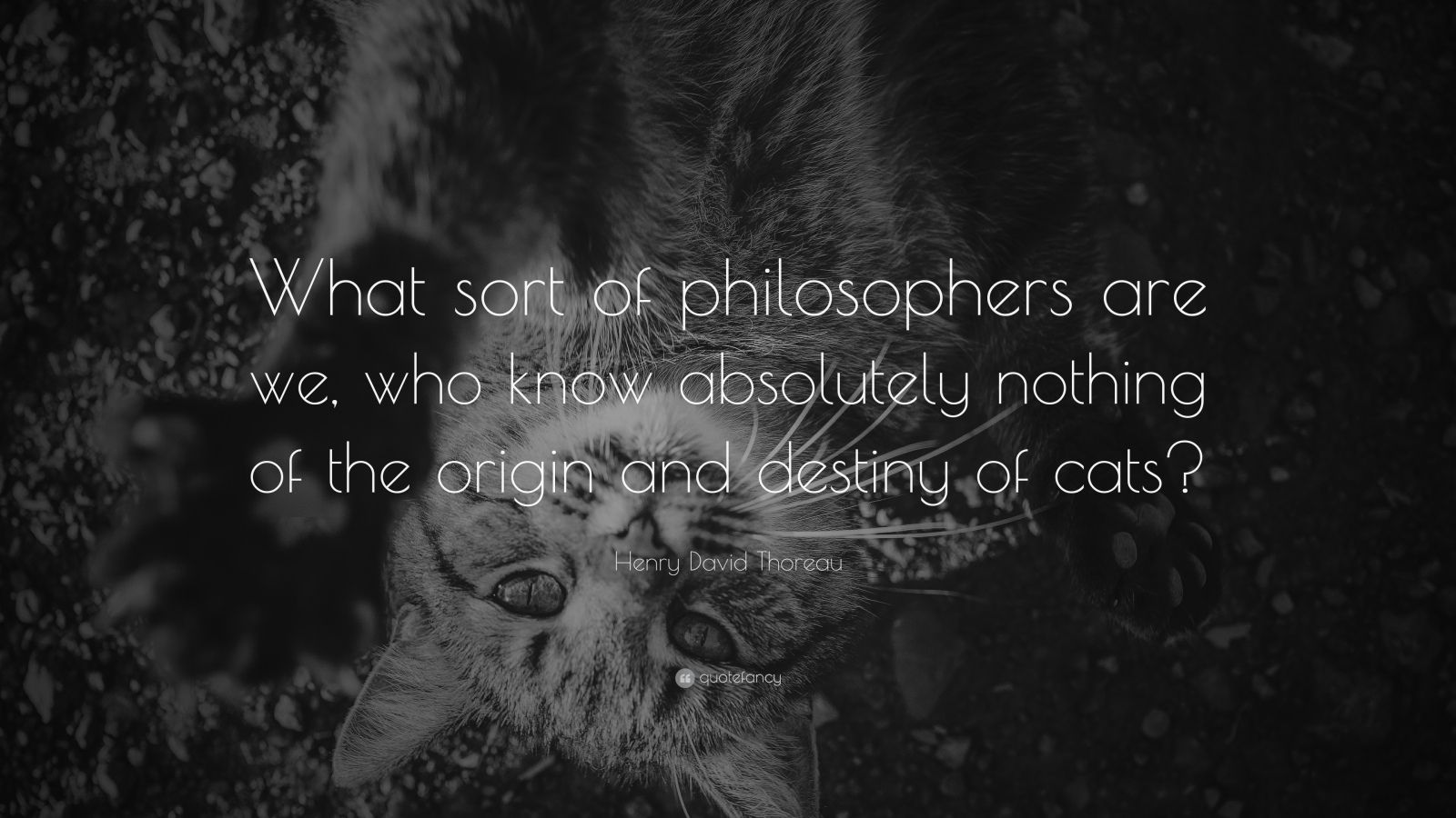 "Henry David Thoreau Quote: ""What sort of philosophers are we, who know absolutely nothing of the origin and destiny of cats?"""