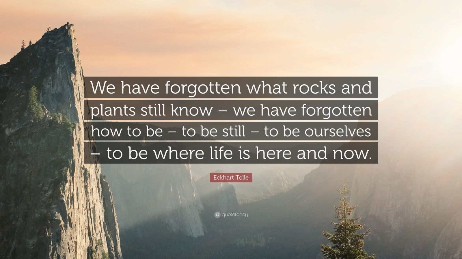 """Eckhart Tolle Quote: """"We have forgotten what rocks and plants still know – we have forgotten how to be – to be still – to be ourselves – to be where life is here and now."""""""