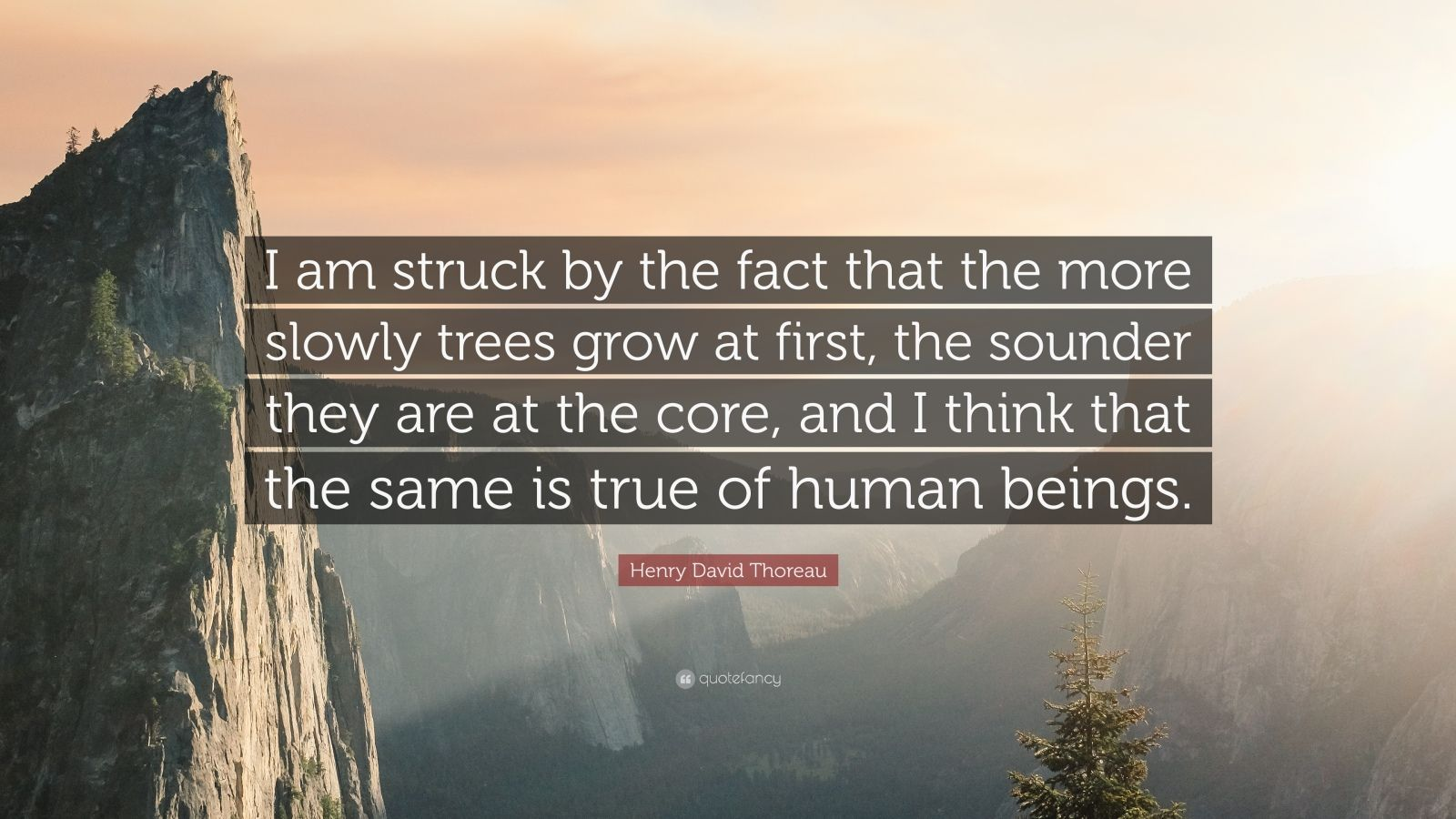 """Henry David Thoreau Quote: """"I am struck by the fact that the more slowly trees grow at first, the sounder they are at the core, and I think that the same is true of human beings."""""""