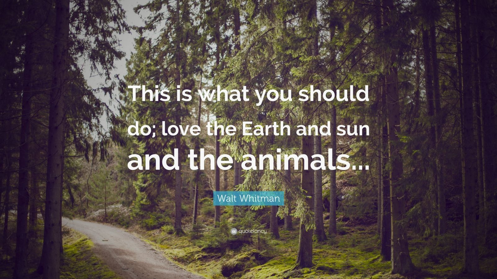 """Walt Whitman Quote: """"This is what you should do; love the Earth and sun and the animals..."""""""