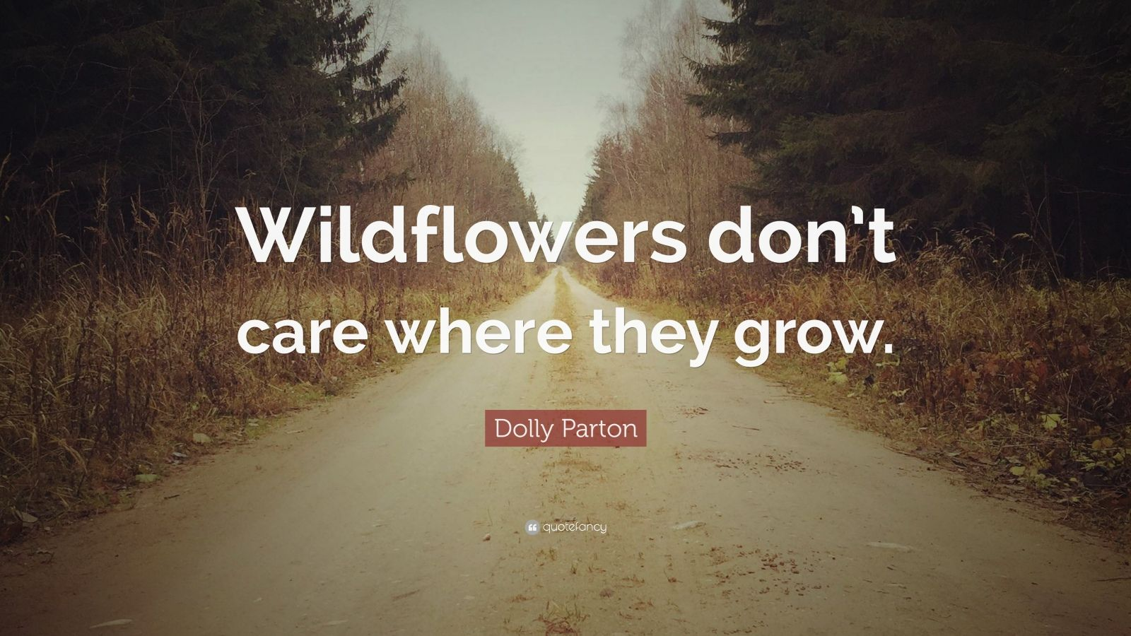 """Dolly Parton Quote: """"Wildflowers don't care where they grow."""""""