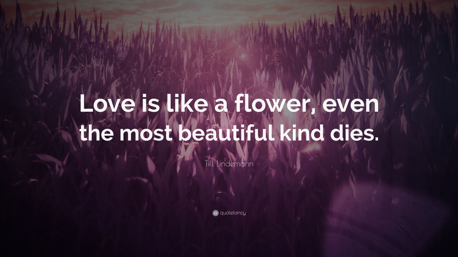 """Till Lindemann Quote: """"Love is like a flower, even the most beautiful kind dies."""""""