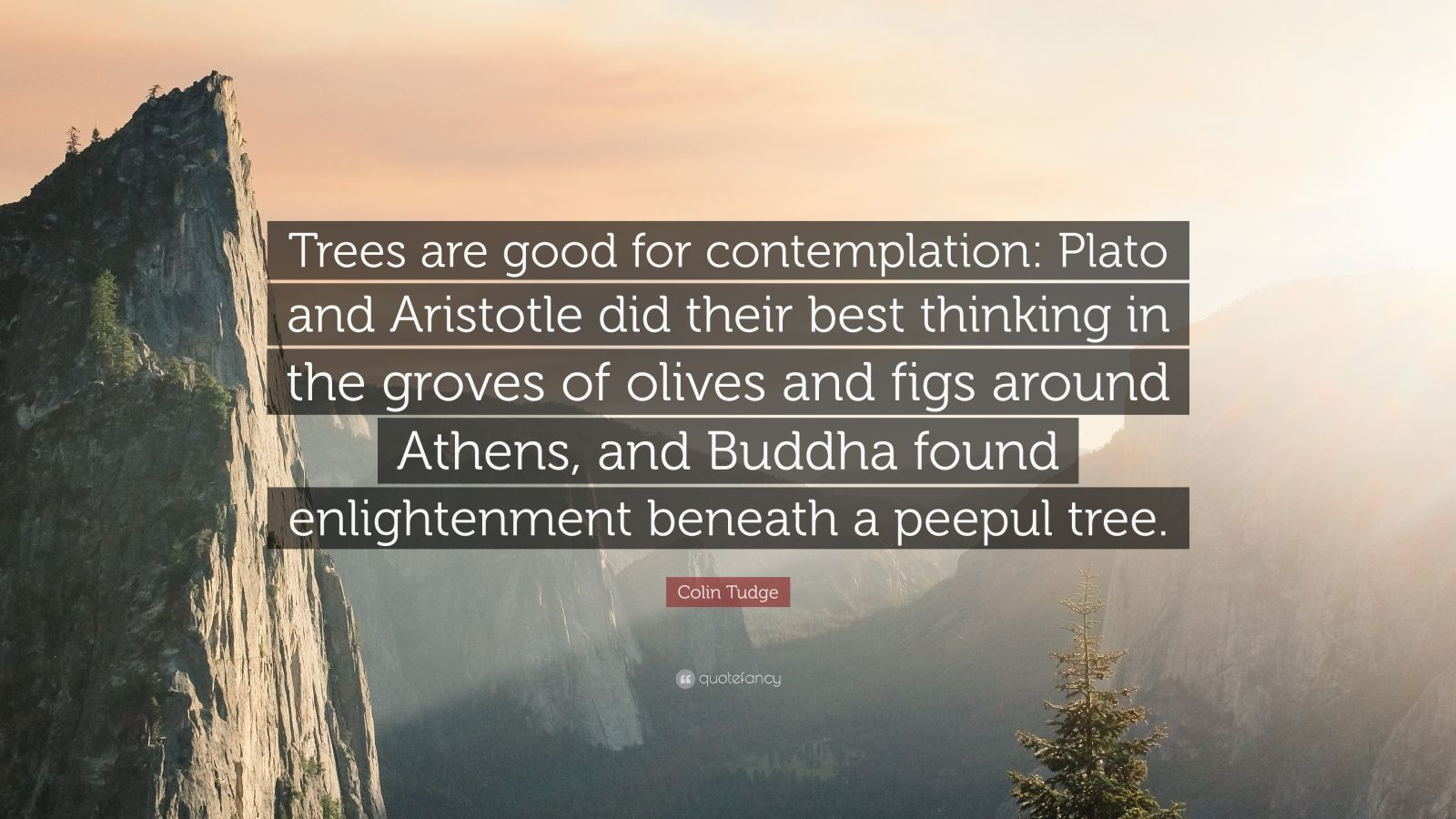 """20 Aristotle Quotes To Enlighten You: Colin Tudge Quote: """"Trees Are Good For Contemplation"""