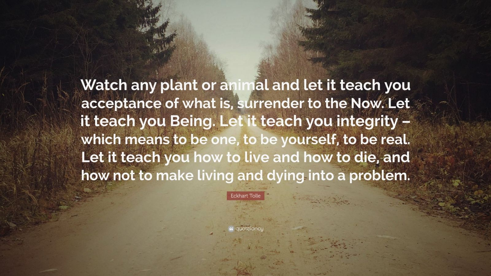 "Eckhart Tolle Quote: ""Watch any plant or animal and let it teach you acceptance of what is, surrender to the Now. Let it teach you Being. Let it teach you integrity – which means to be one, to be yourself, to be real. Let it teach you how to live and how to die, and how not to make living and dying into a problem."""