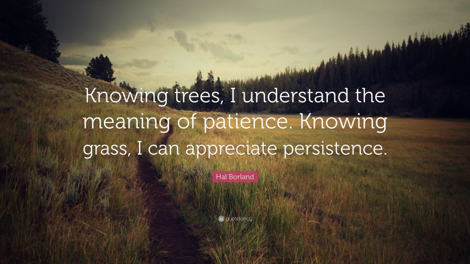 "Hal Borland Quote: ""Knowing trees, I understand the meaning of patience. Knowing grass, I can appreciate persistence."""