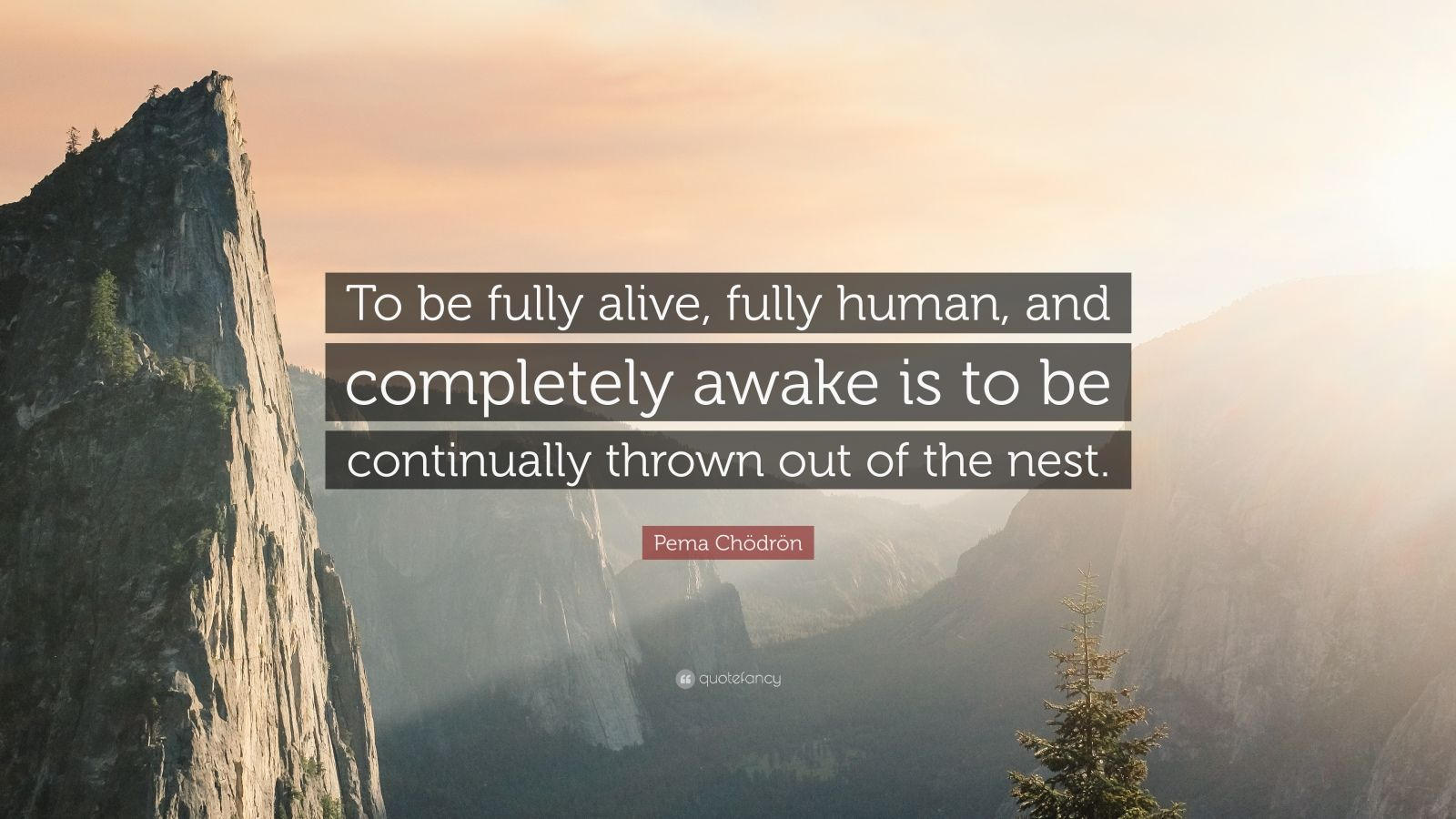 "Pema Chödrön Quote: ""To be fully alive, fully human, and completely awake is to be continually thrown out of the nest."""