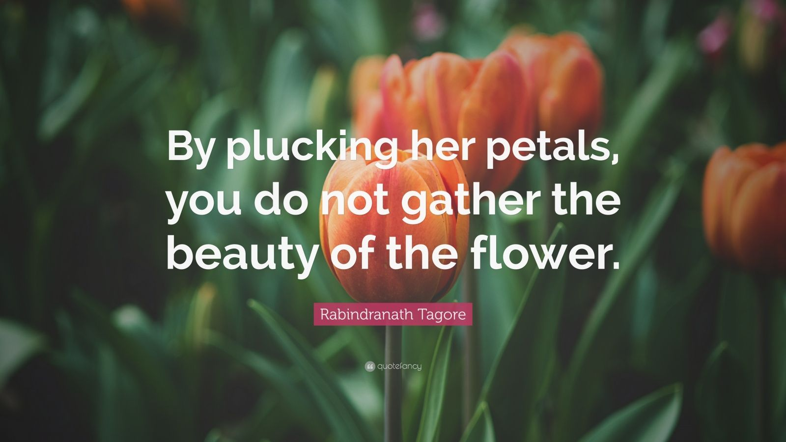 """Rabindranath Tagore Quote: """"By plucking her petals, you do not gather the beauty of the flower."""""""