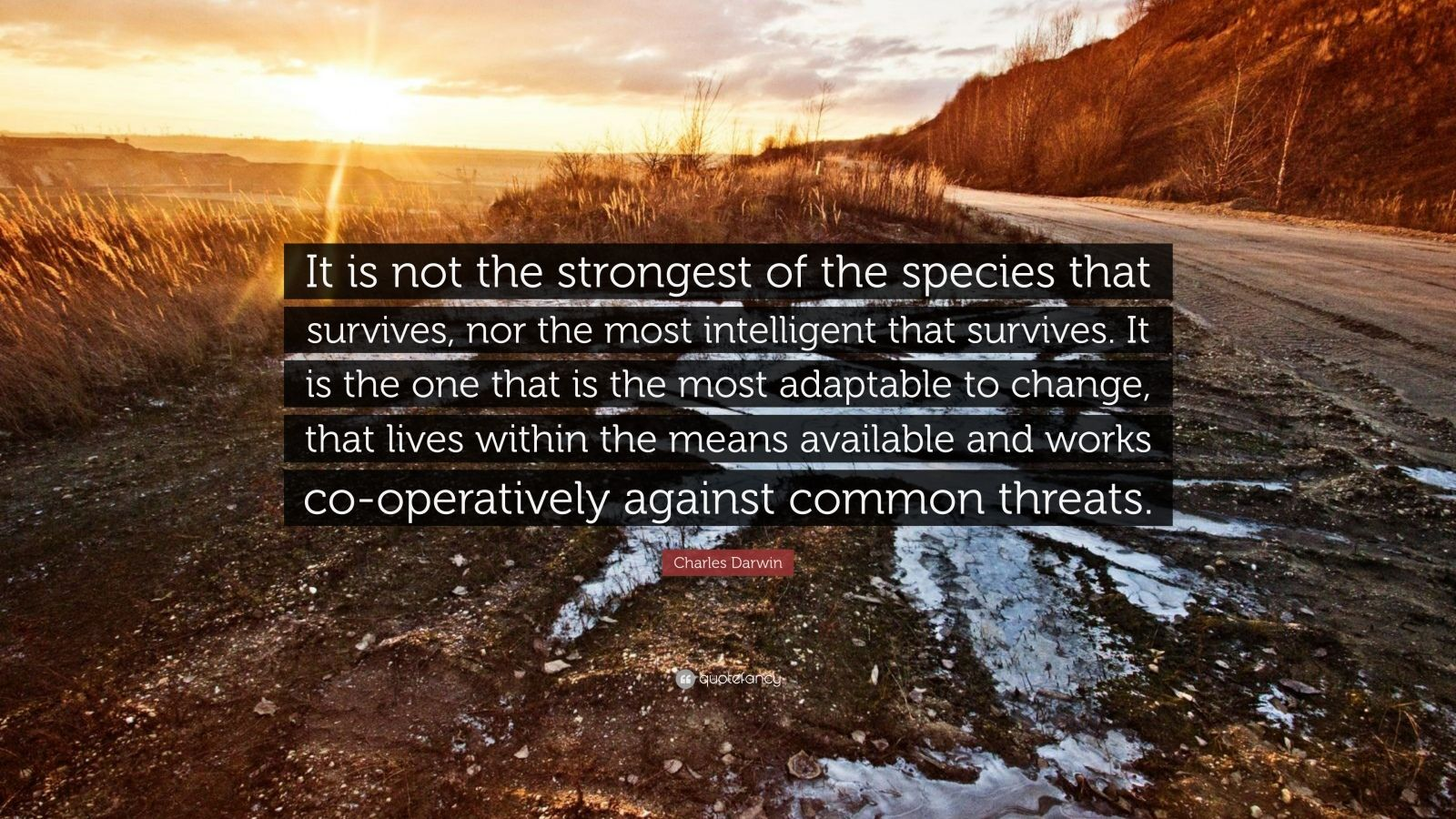 "Charles Darwin Quote: ""It is not the strongest of the species that survives, nor the most intelligent that survives. It is the one that is the most adaptable to change, that lives within the means available and works co-operatively against common threats."""