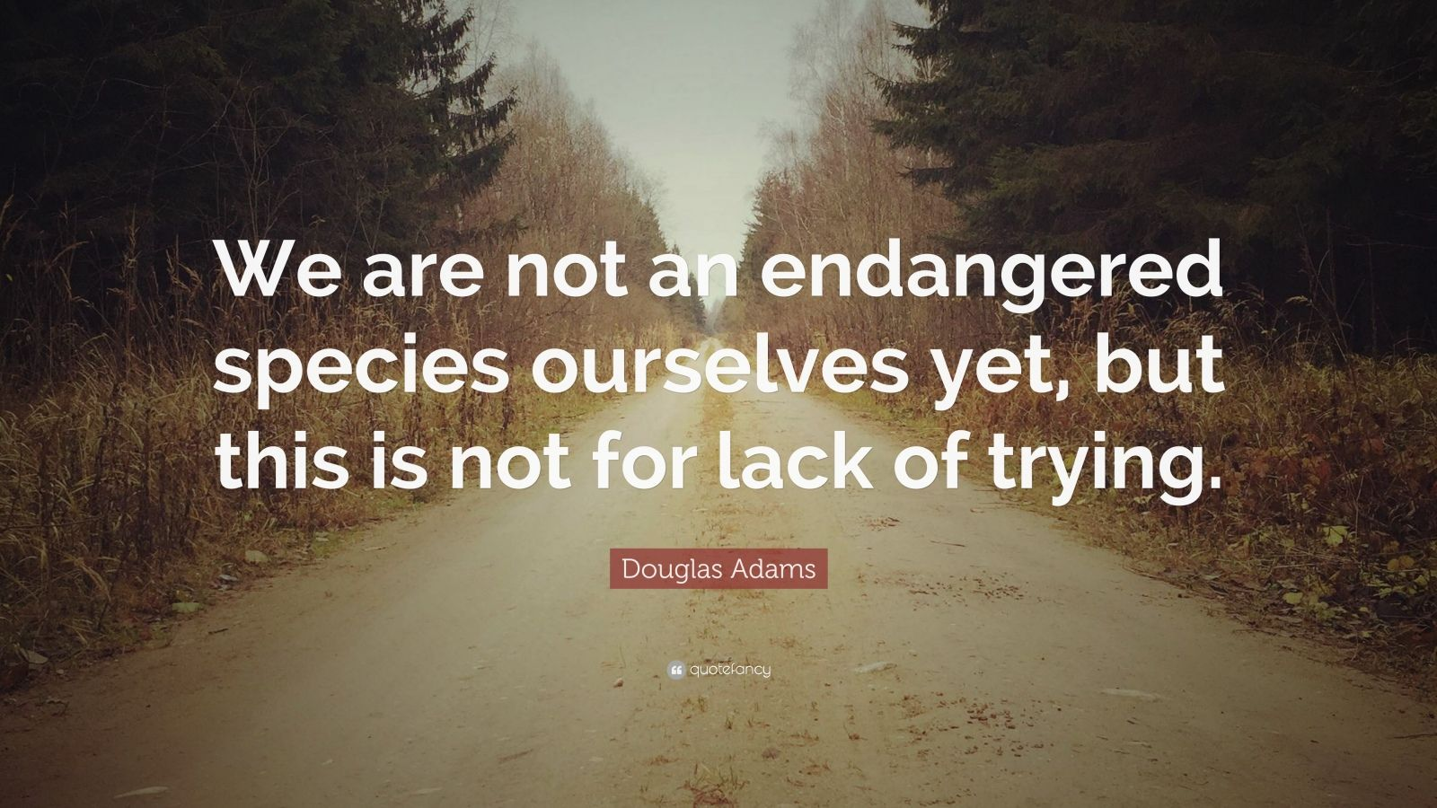 "Douglas Adams Quote: ""We are not an endangered species ourselves yet, but this is not for lack of trying."""