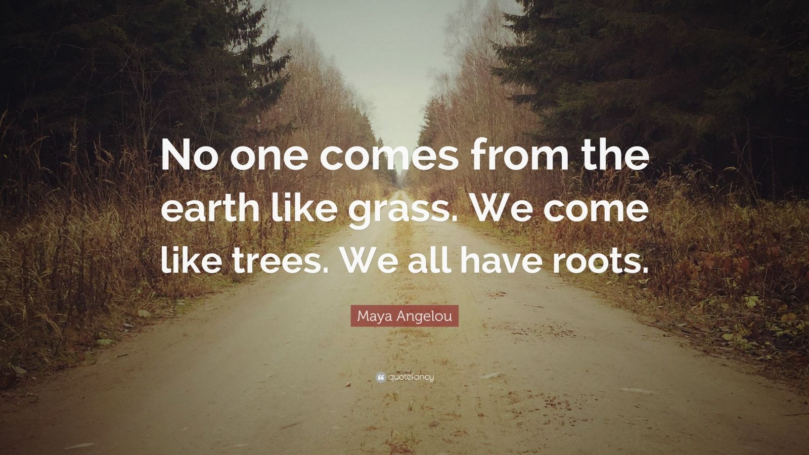 """Maya Angelou Quote: """"No one comes from the earth like grass. We come like trees. We all have roots."""""""