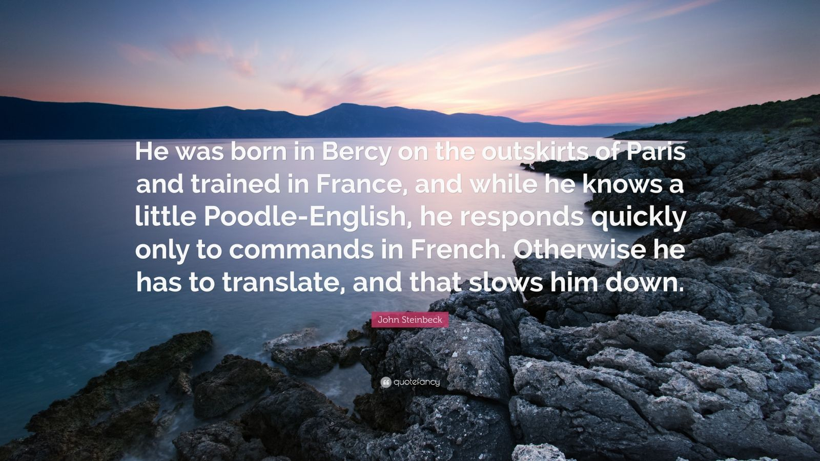 """John Steinbeck Quote: """"He was born in Bercy on the outskirts of Paris and trained in France, and while he knows a little Poodle-English, he responds quickly only to commands in French. Otherwise he has to translate, and that slows him down."""""""