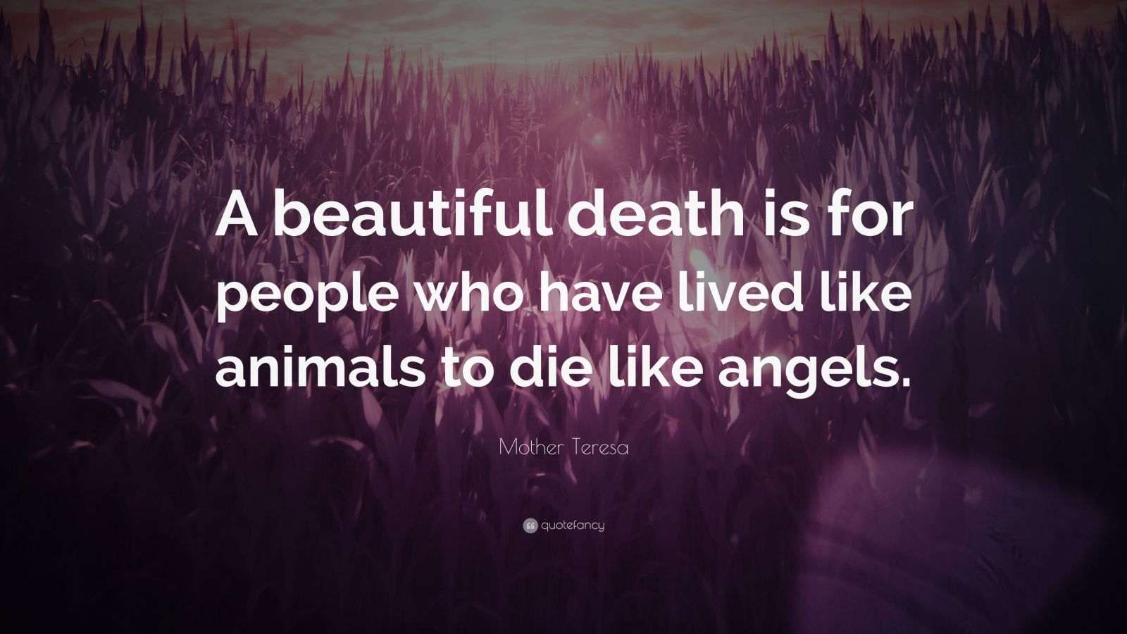 "Mother Teresa Quote: ""A beautiful death is for people who have lived like animals to die like angels."""