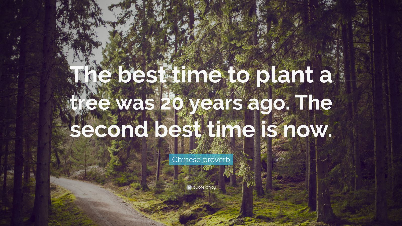 "Chinese proverb Quote: ""The best time to plant a tree was 20 years ago. The second best time is now."""