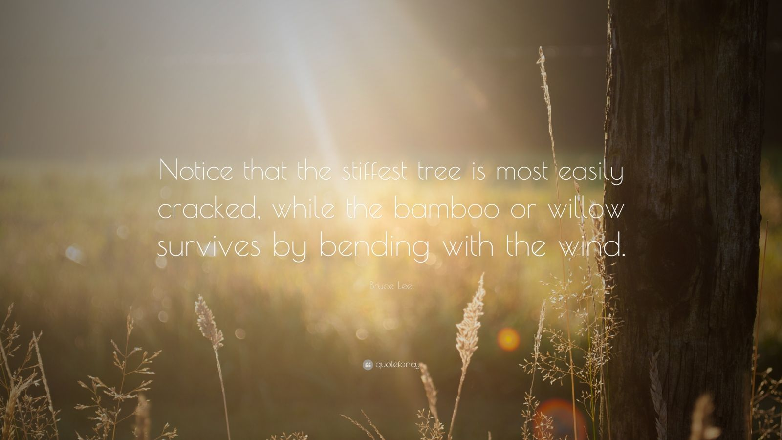 "Bruce Lee Quote: ""Notice that the stiffest tree is most easily cracked, while the bamboo or willow survives by bending with the wind."""