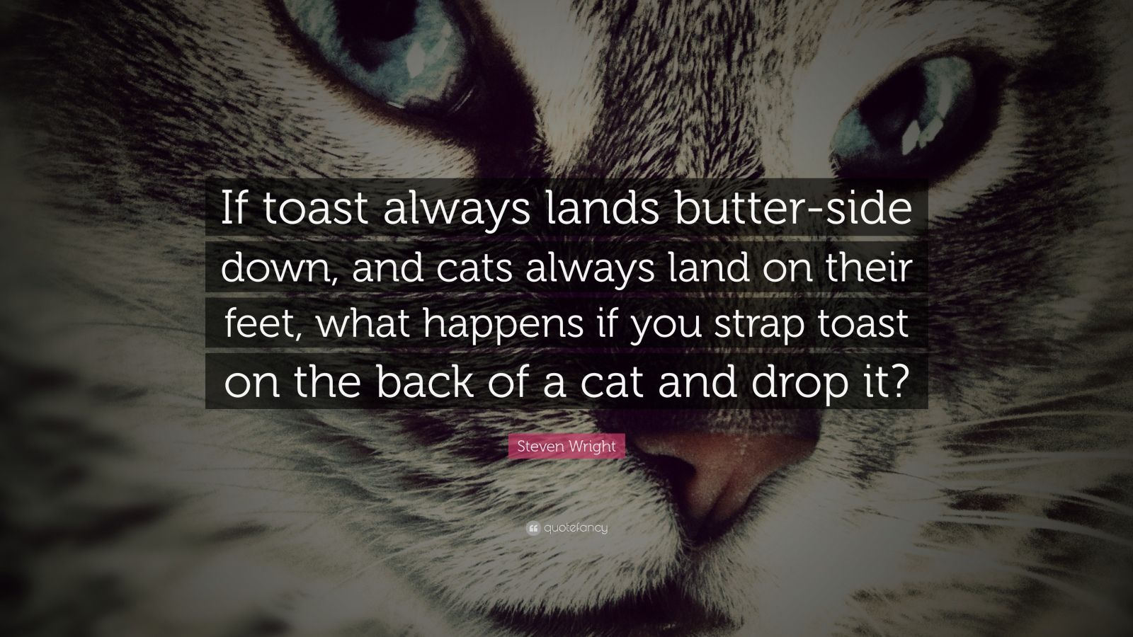 """Steven Wright Quote: """"If toast always lands butter-side down, and cats always land on their feet, what happens if you strap toast on the back of a cat and drop it?"""""""