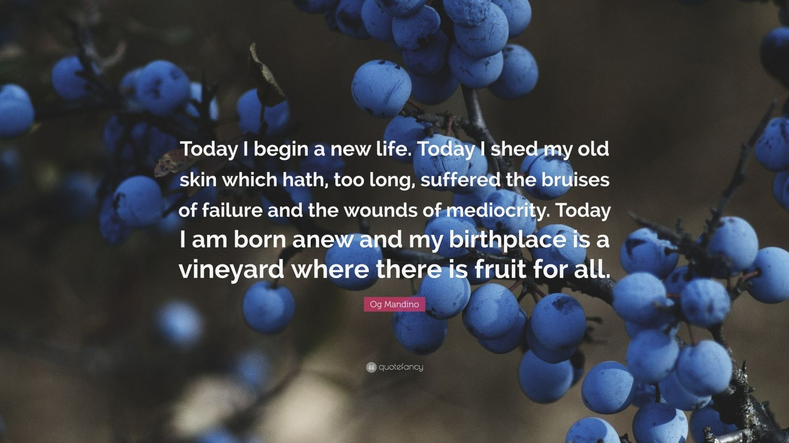 """Og Mandino Quote: """"Today I begin a new life. Today I shed my old skin which hath, too long, suffered the bruises of failure and the wounds of mediocrity. Today I am born anew and my birthplace is a vineyard where there is fruit for all."""""""
