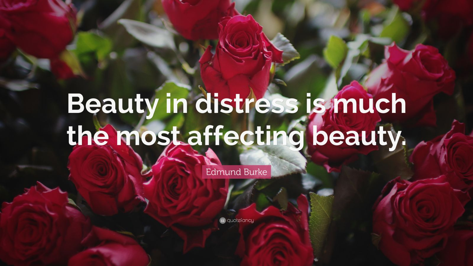 "Edmund Burke Quote: ""Beauty in distress is much the most affecting beauty."""