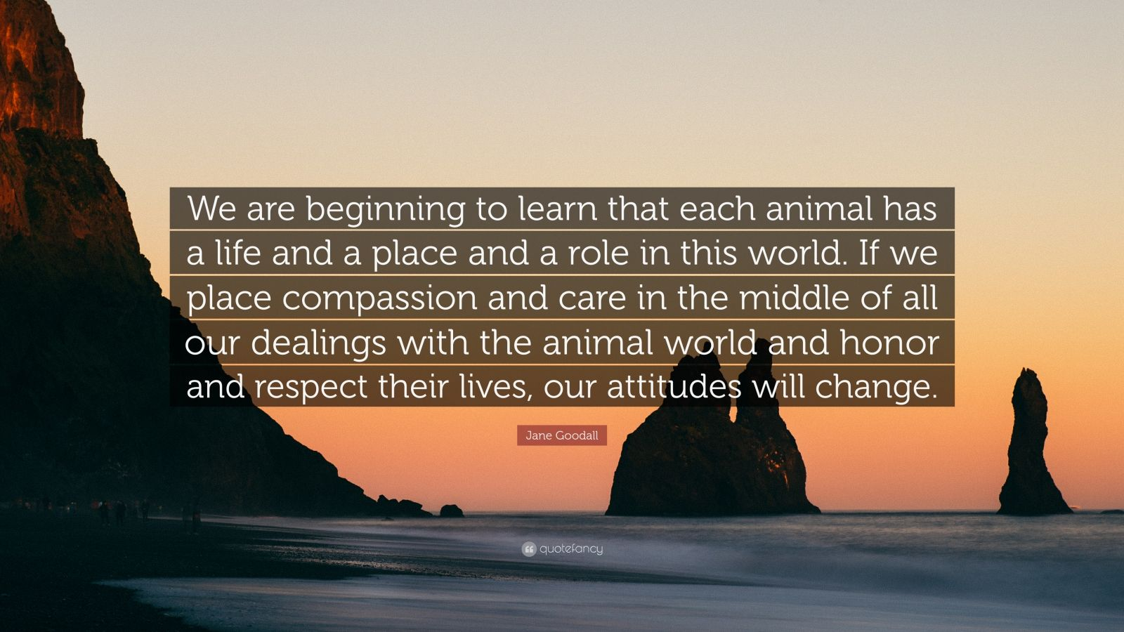 "Jane Goodall Quote: ""We are beginning to learn that each animal has a life and a place and a role in this world. If we place compassion and care in the middle of all our dealings with the animal world and honor and respect their lives, our attitudes will change."""