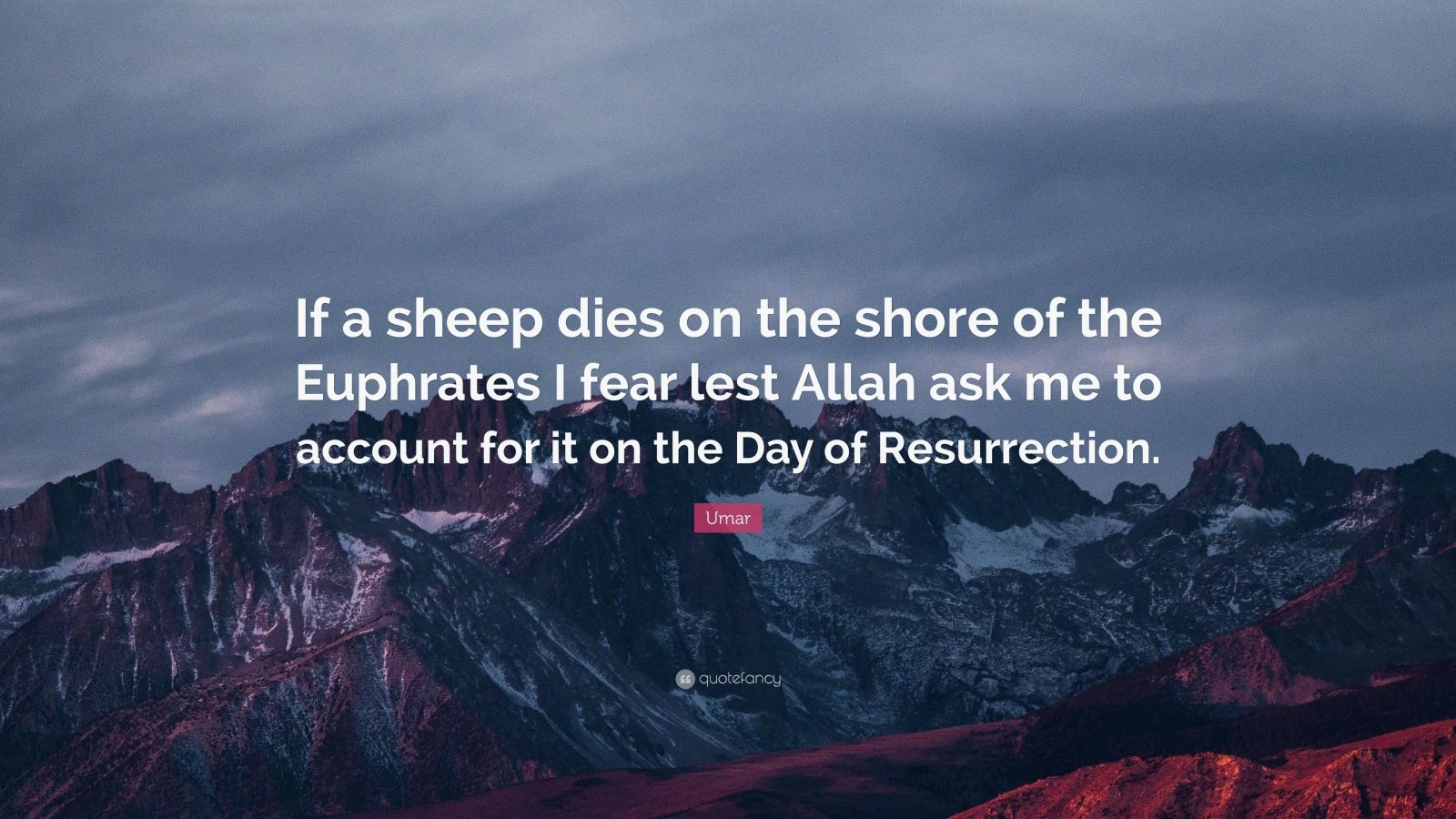 """Umar Quote: """"If a sheep dies on the shore of the Euphrates I fear lest Allah ask me to account for it on the Day of Resurrection."""""""