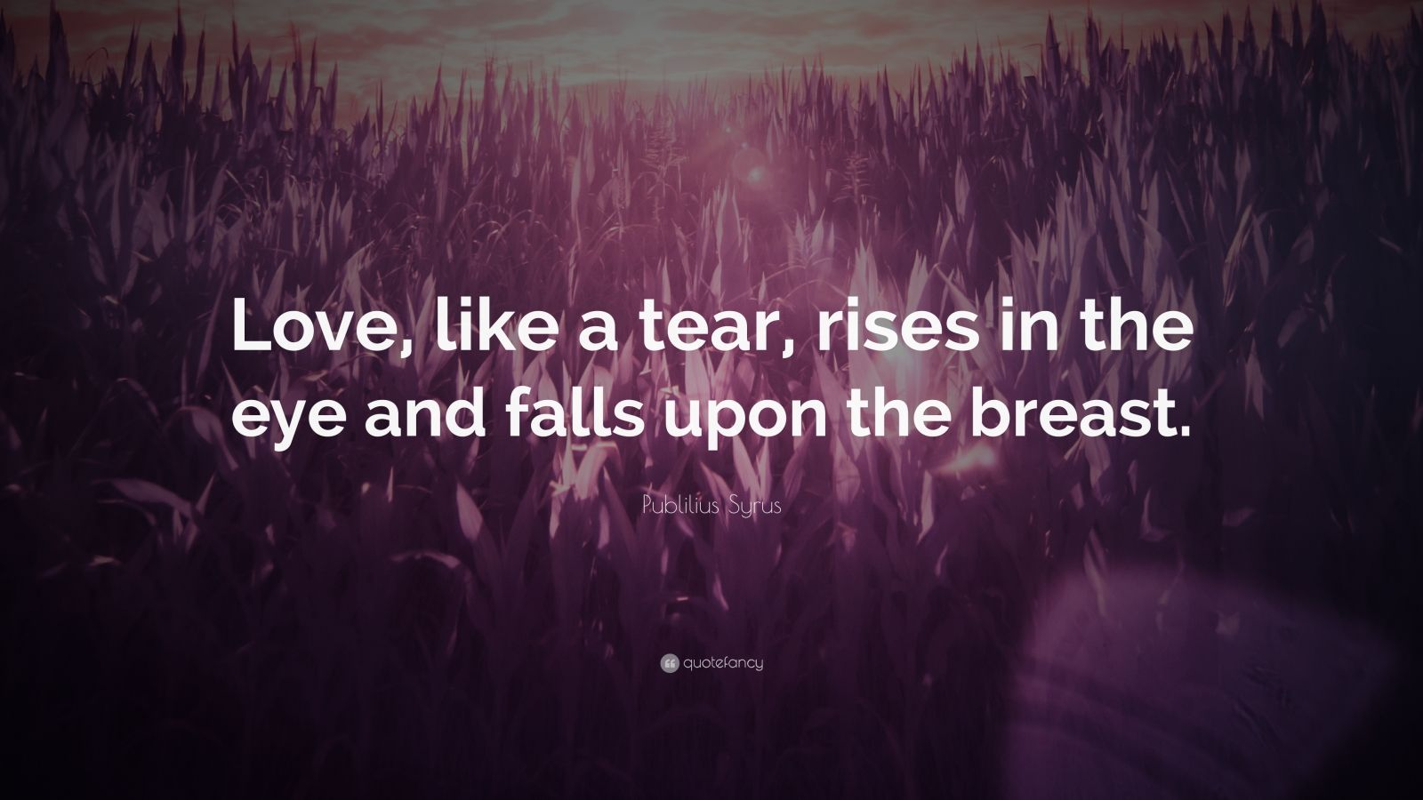 "Publilius Syrus Quote: ""Love, like a tear, rises in the eye and falls upon the breast."""