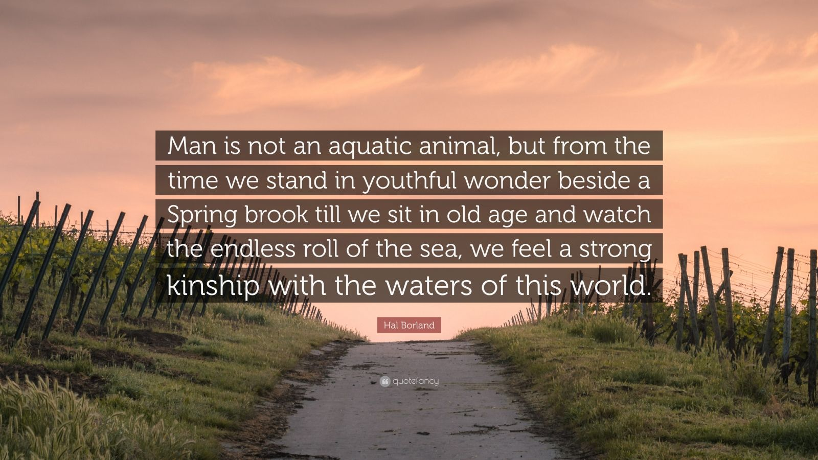 "Hal Borland Quote: ""Man is not an aquatic animal, but from the time we stand in youthful wonder beside a Spring brook till we sit in old age and watch the endless roll of the sea, we feel a strong kinship with the waters of this world."""
