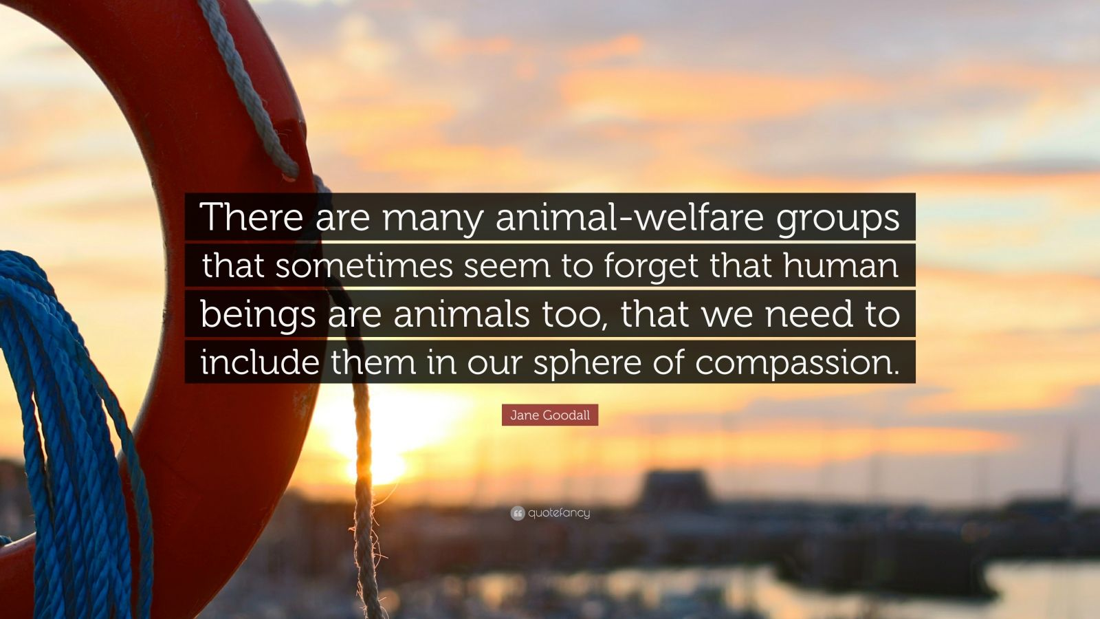 "Jane Goodall Quote: ""There are many animal-welfare groups that sometimes seem to forget that human beings are animals too, that we need to include them in our sphere of compassion."""