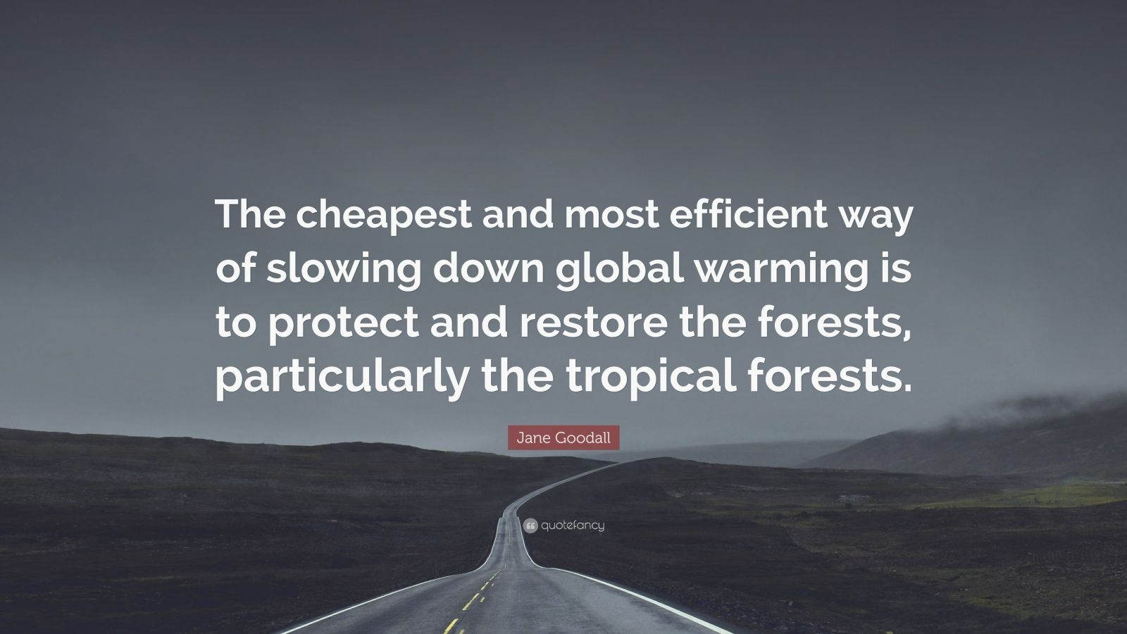 """Jane Goodall Quote: """"The cheapest and most efficient way of slowing down global warming is to protect and restore the forests, particularly the tropical forests."""""""