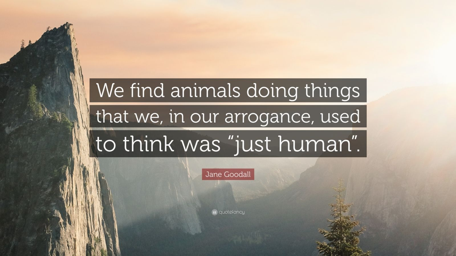 """Jane Goodall Quote: """"We find animals doing things that we, in our arrogance, used to think was """"just human""""."""""""