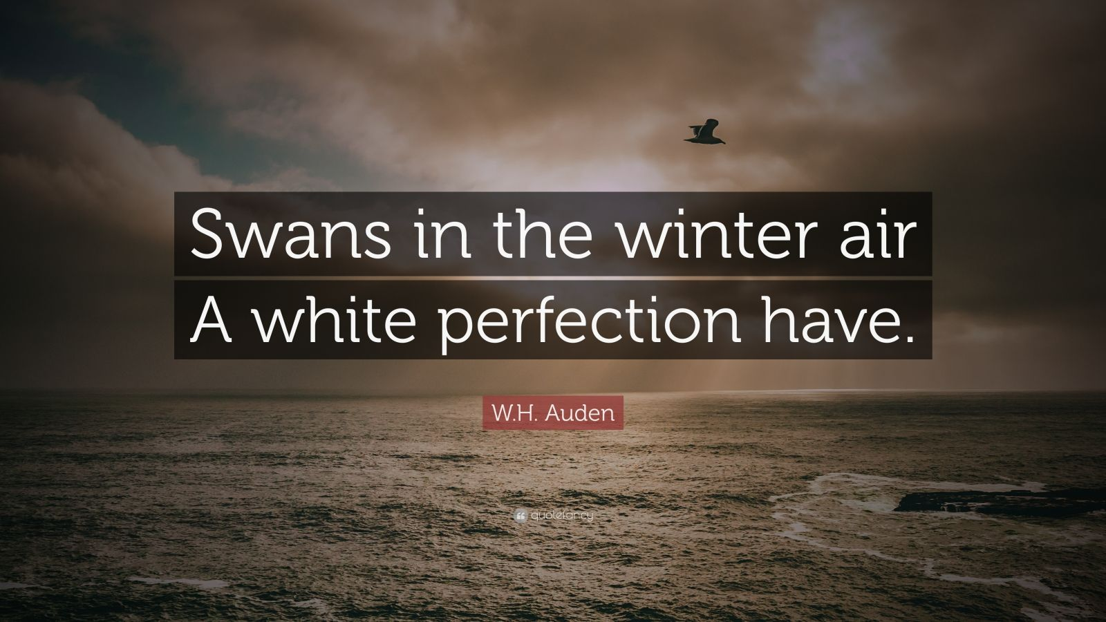 """W.H. Auden Quote: """"Swans in the winter air A white perfection have."""""""