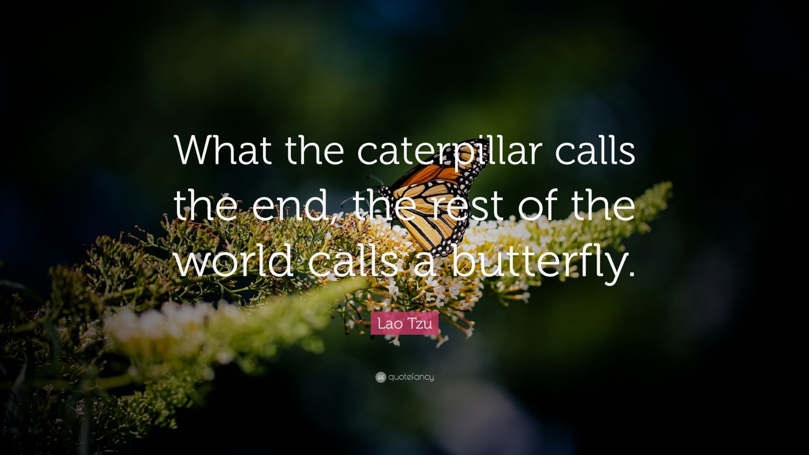 Butterfly and caterpillar quotes