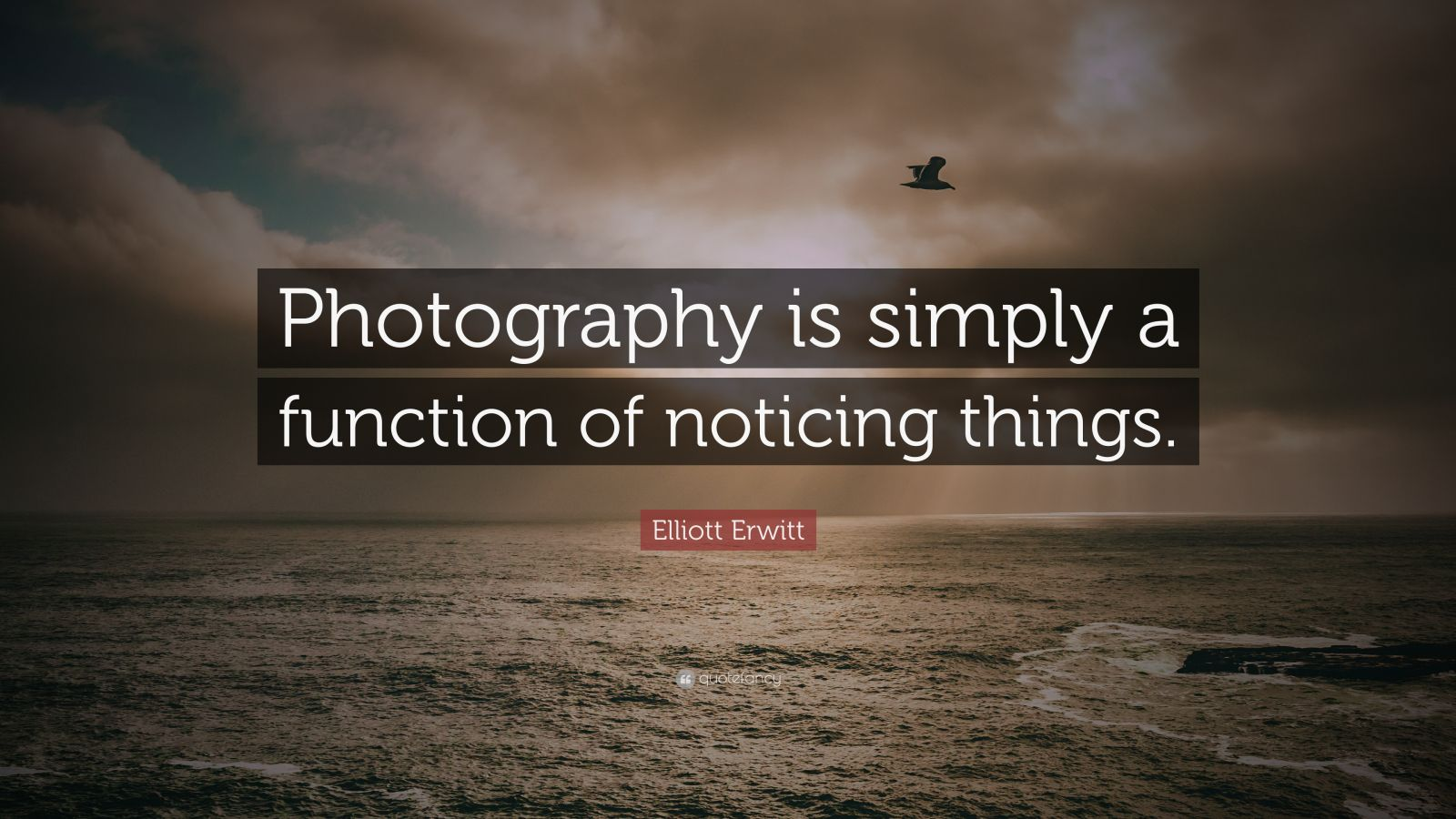 "Elliott Erwitt Quote: ""Photography is simply a function of noticing things."""