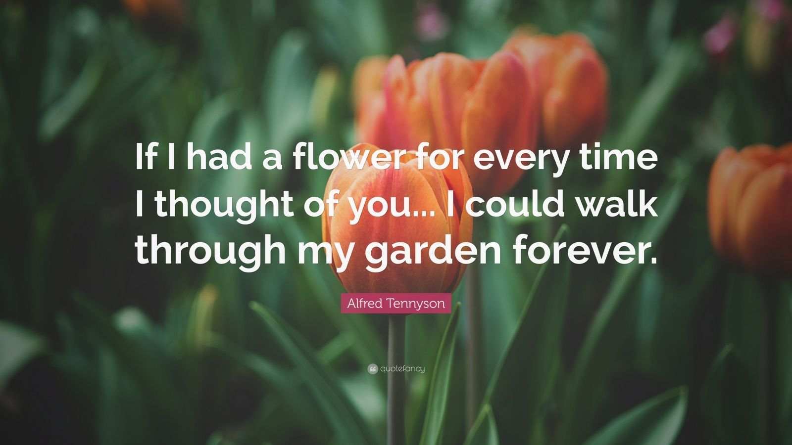 "Romantic Quotes: ""If I had a flower for every time I thought of you... I could walk through my garden forever."" — Alfred Tennyson"