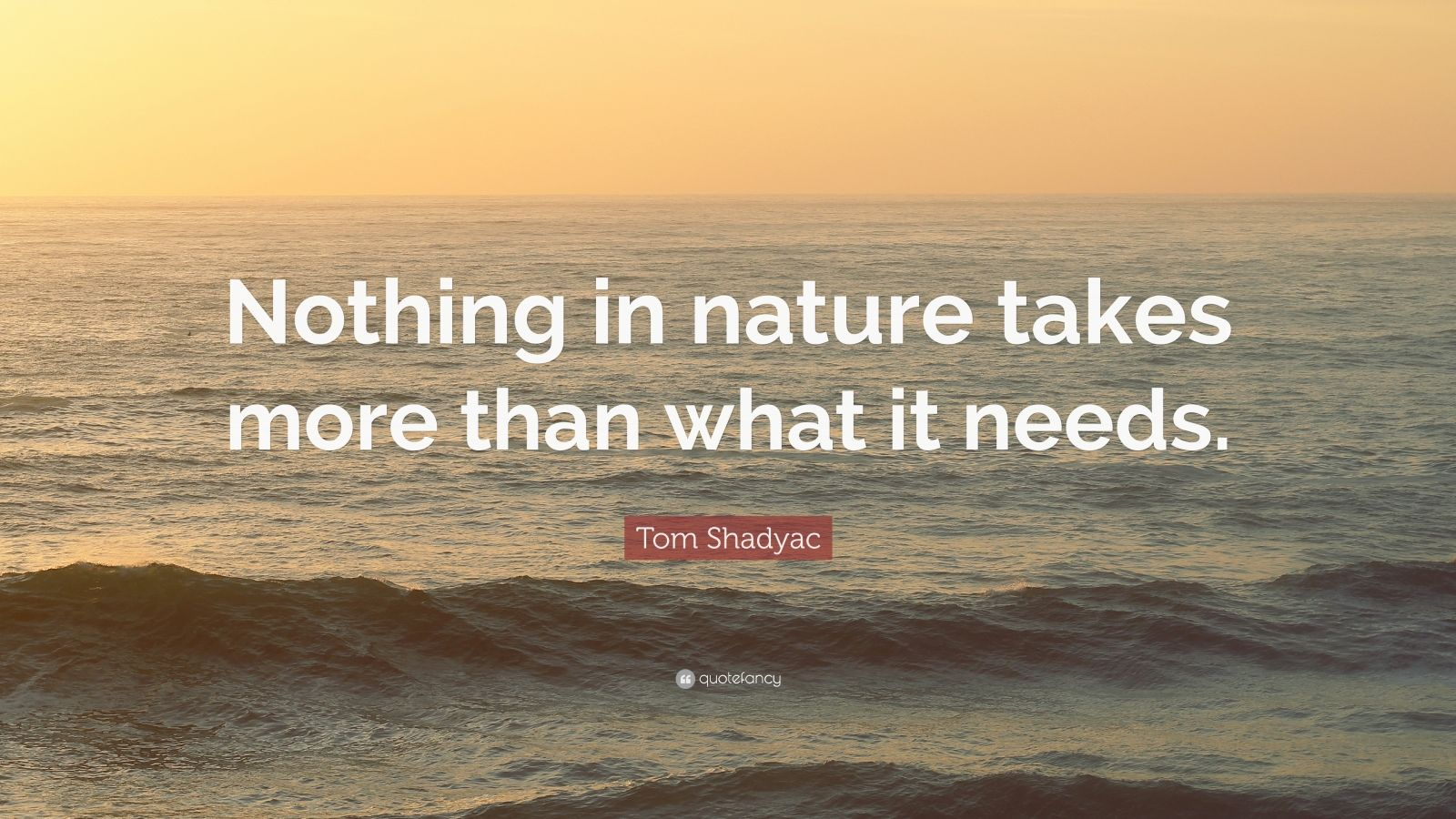 """Tom Shadyac Quote: """"Nothing in nature takes more than what it needs."""""""