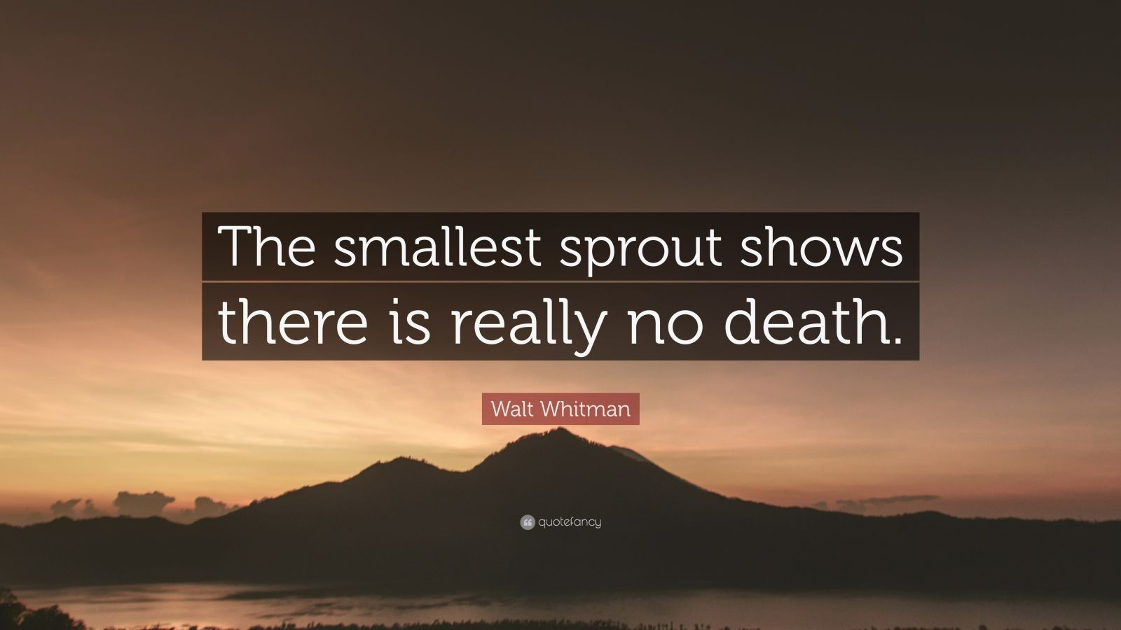 """Walt Whitman Quote: """"The smallest sprout shows there is really no death."""""""