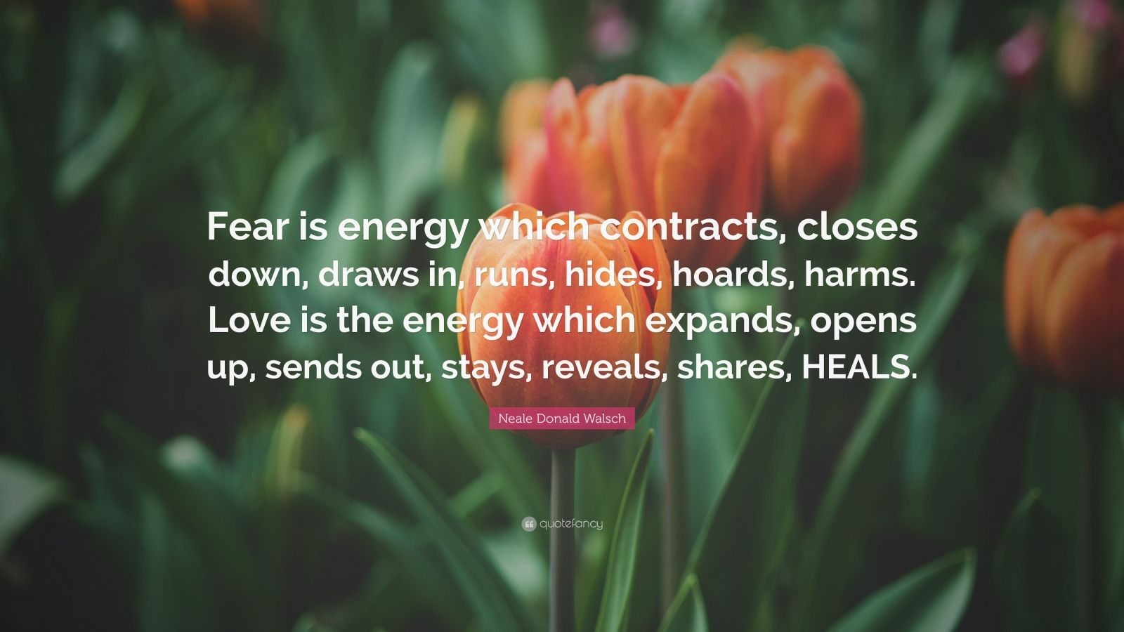"Neale Donald Walsch Quote: ""Fear is energy which contracts, closes down, draws in, runs, hides, hoards, harms. Love is the energy which expands, opens up, sends out, stays, reveals, shares, HEALS."""