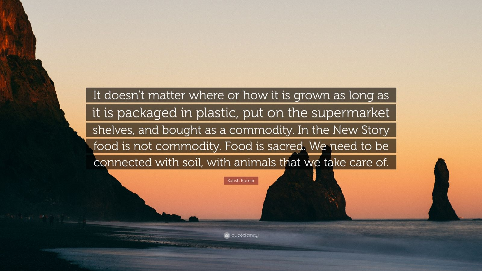 """Satish Kumar Quote: """"It doesn't matter where or how it is grown as long as it is packaged in plastic, put on the supermarket shelves, and bought as a commodity. In the New Story food is not commodity. Food is sacred. We need to be connected with soil, with animals that we take care of."""""""