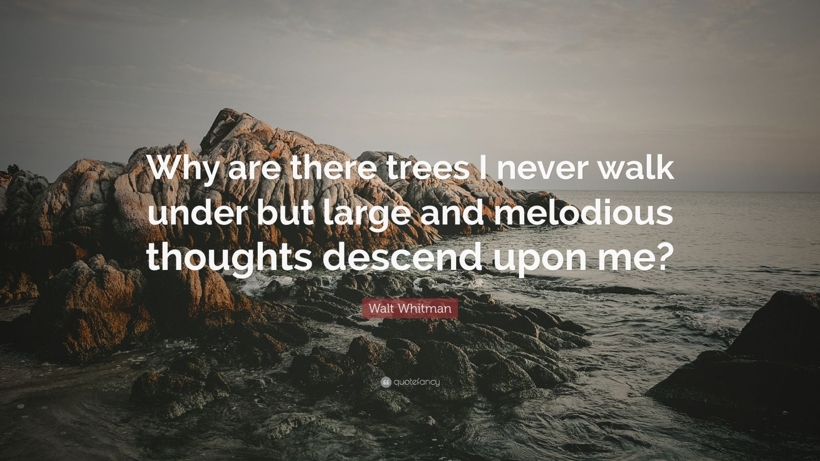 """Walt Whitman Quote: """"Why are there trees I never walk under but large and melodious thoughts descend upon me?"""""""