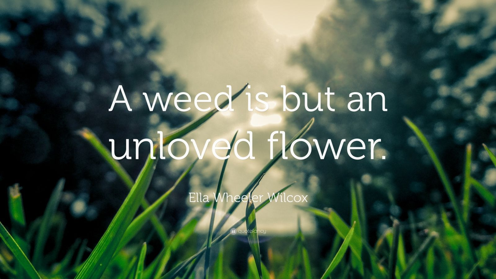"""Ella Wheeler Wilcox Quote: """"A weed is but an unloved flower."""""""