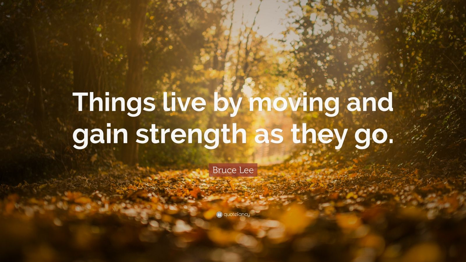 """Bruce Lee Quote: """"Things live by moving and gain strength as they go."""""""