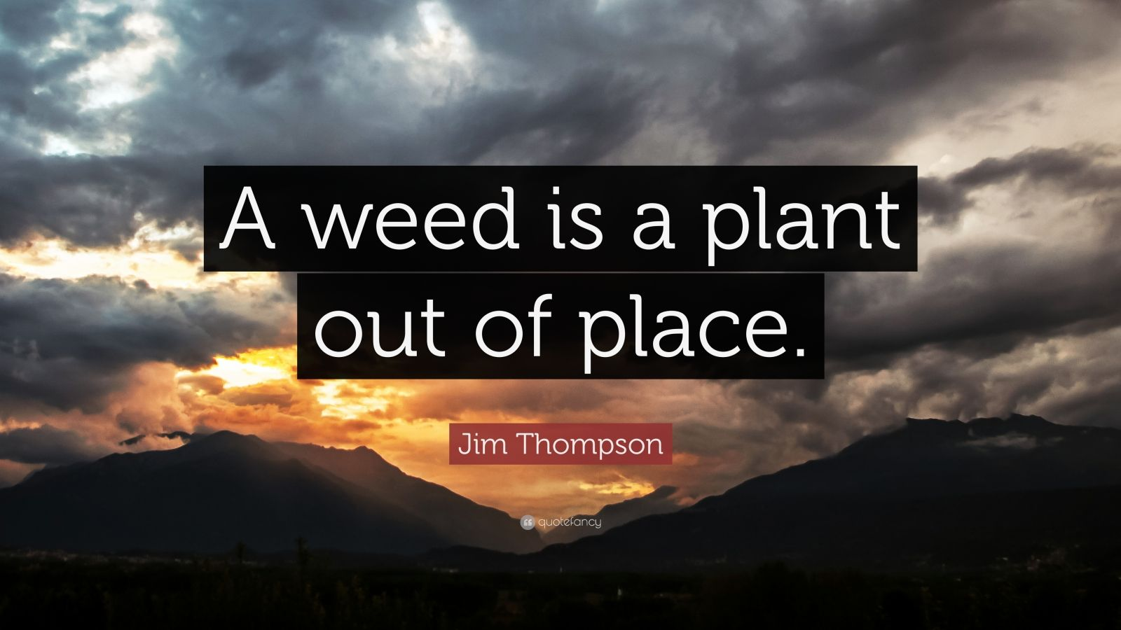 "Jim Thompson Quote: ""A weed is a plant out of place."""
