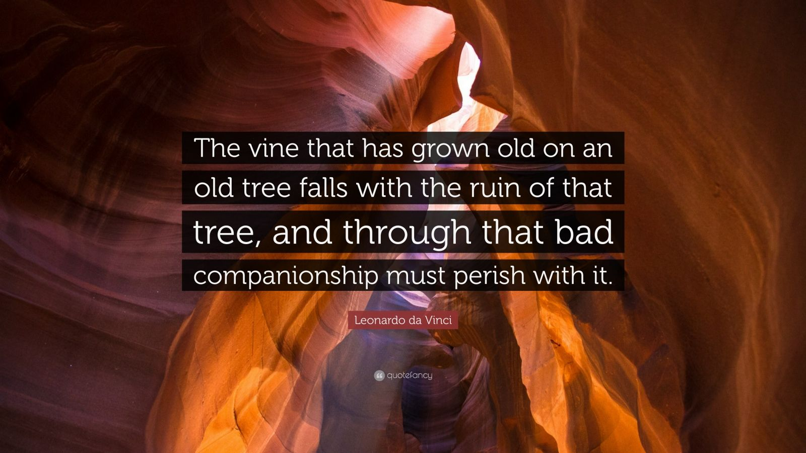 "Leonardo da Vinci Quote: ""The vine that has grown old on an old tree falls with the ruin of that tree, and through that bad companionship must perish with it."""