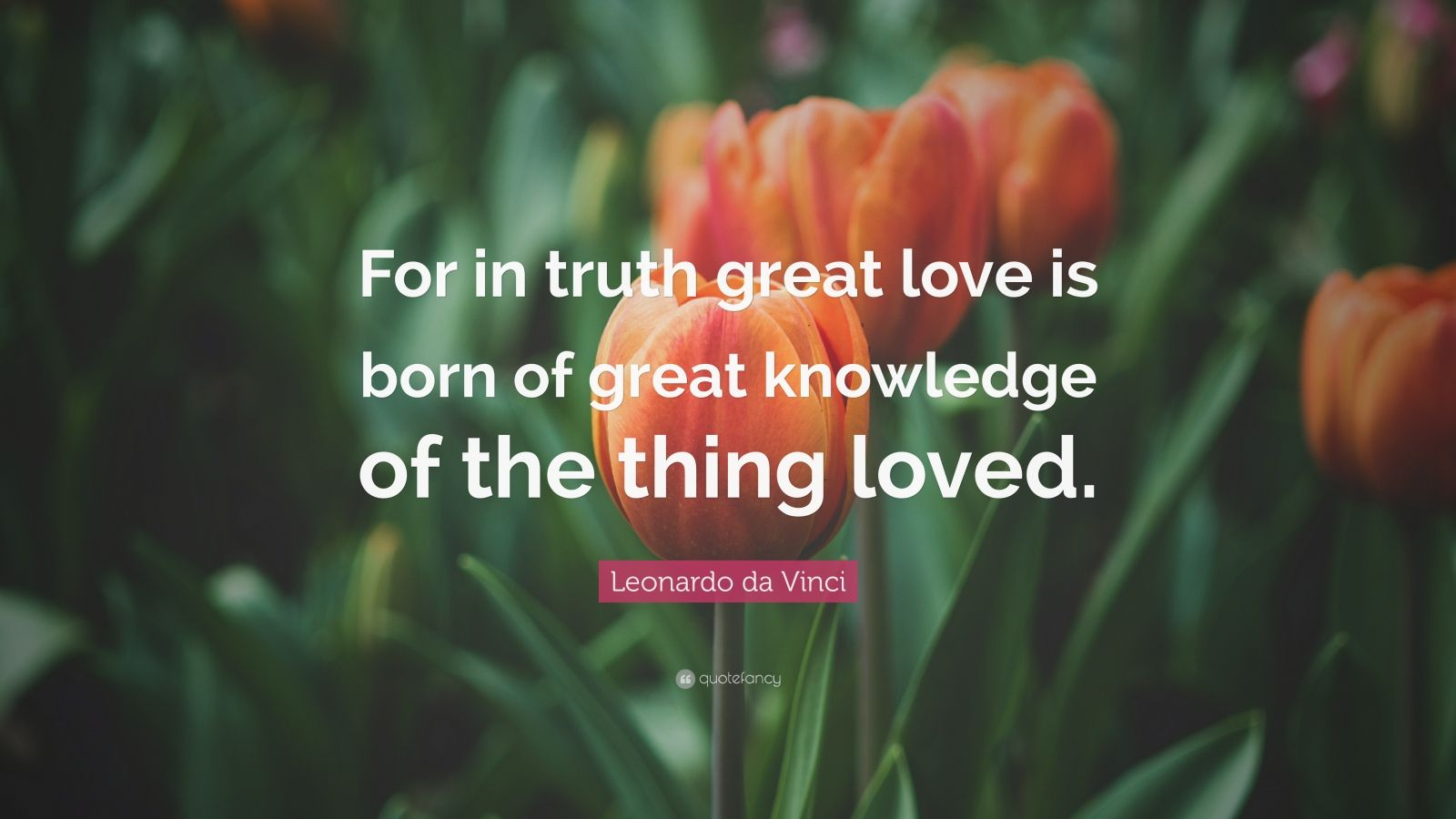 """Leonardo da Vinci Quote: """"For in truth great love is born of great knowledge of the thing loved."""""""