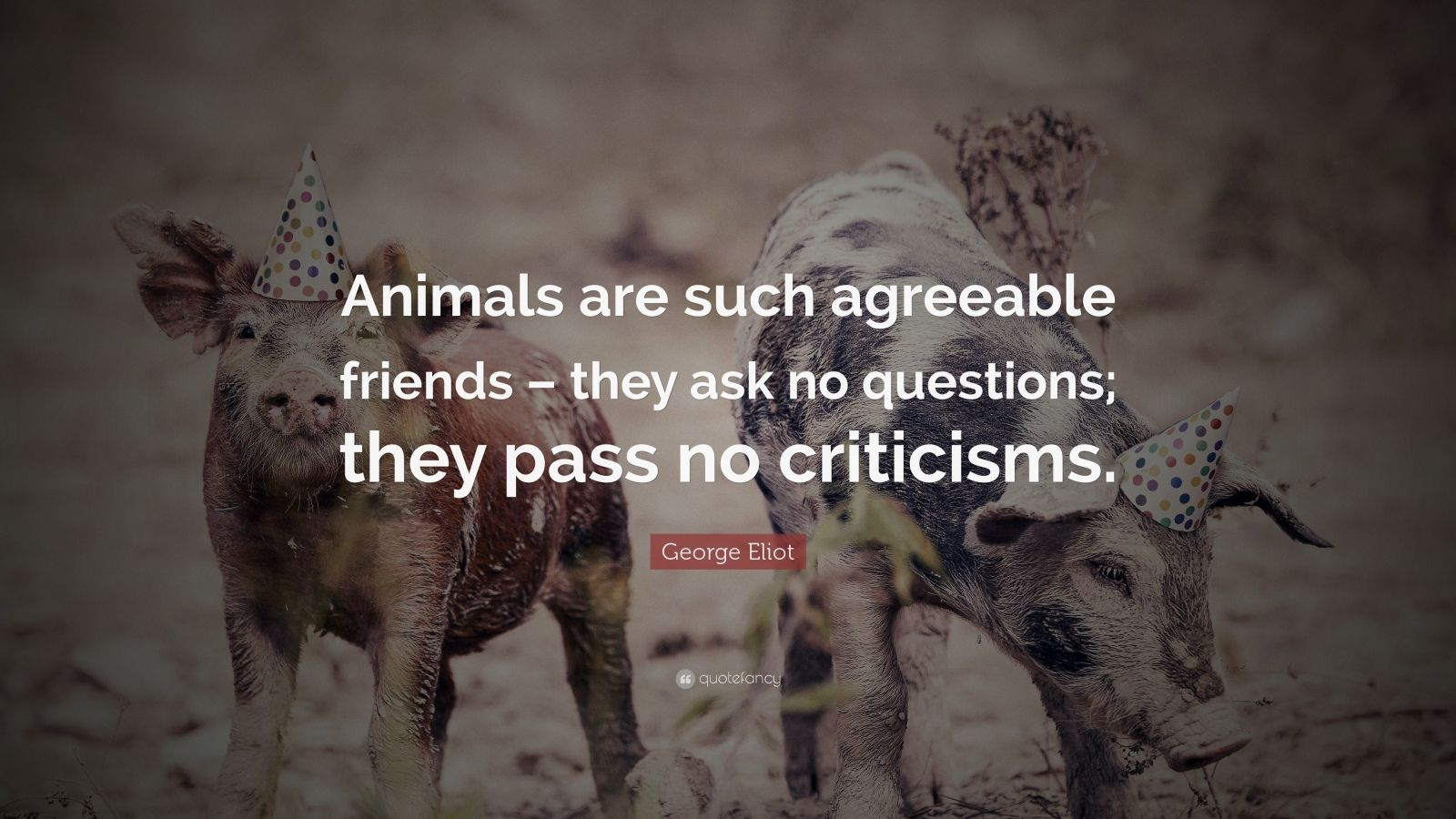 essays about animals are our friends