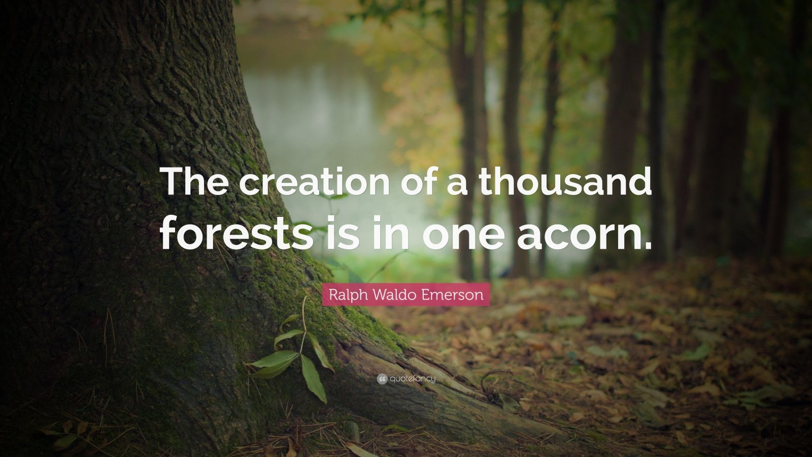 "Ralph Waldo Emerson Quote: ""The creation of a thousand forests is in one acorn."""