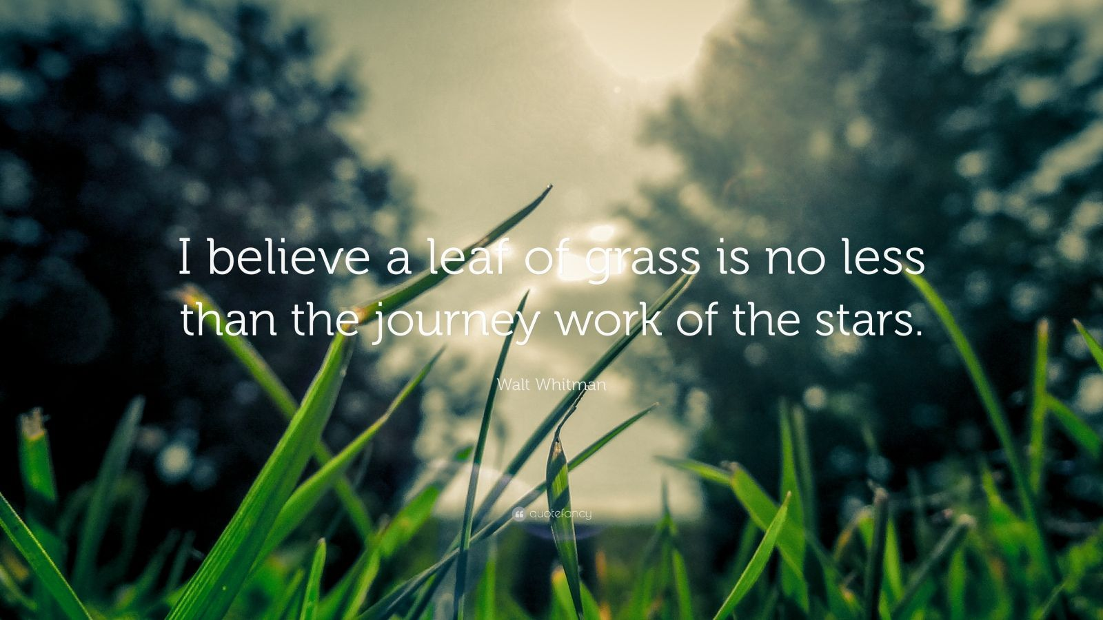 """Walt Whitman Quote: """"I believe a leaf of grass is no less than the journey work of the stars."""""""