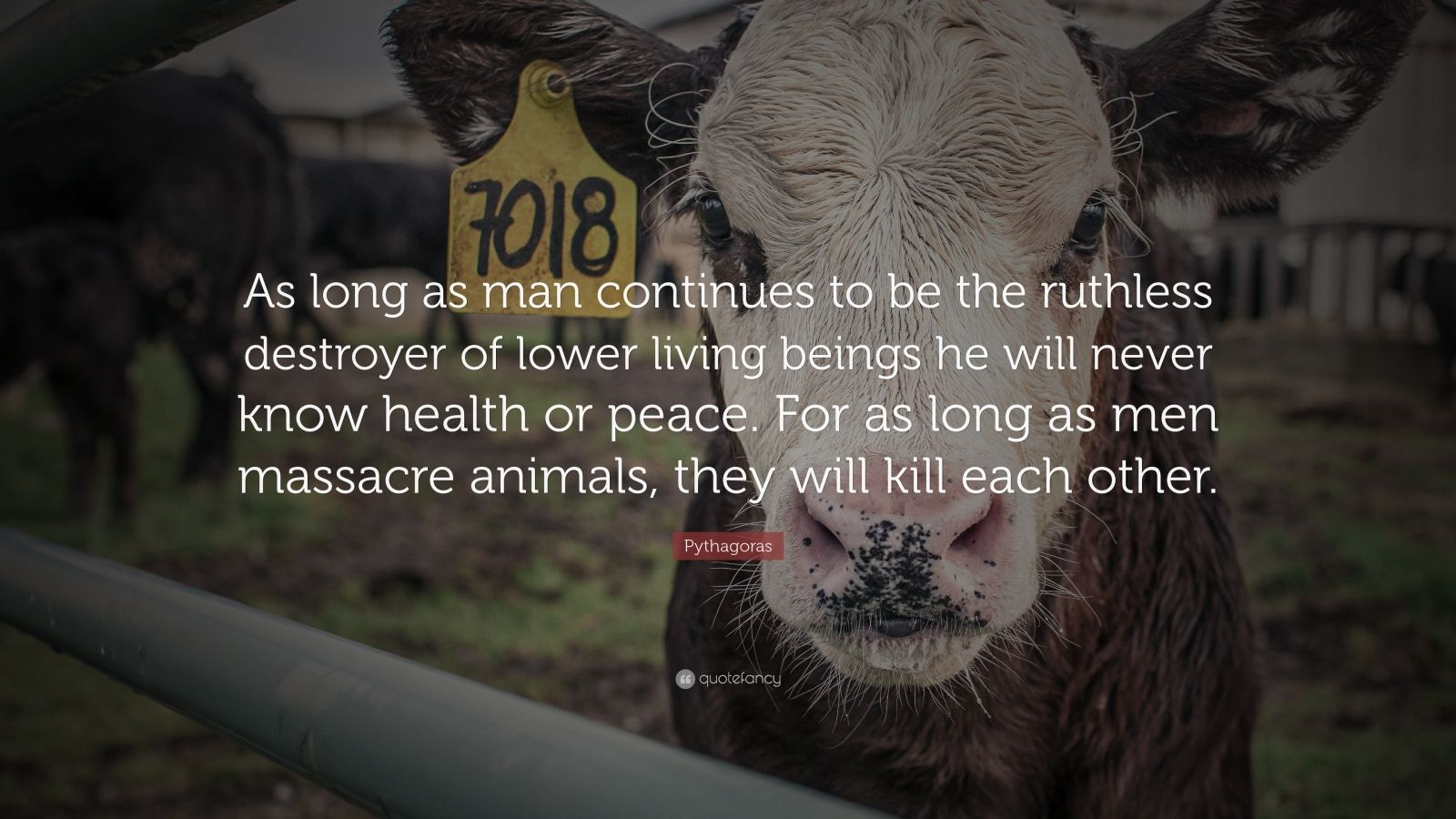 """Pythagoras Quote: """"As long as man continues to be the ruthless destroyer of lower living beings he will never know health or peace. For as long as men massacre animals, they will kill each other."""""""