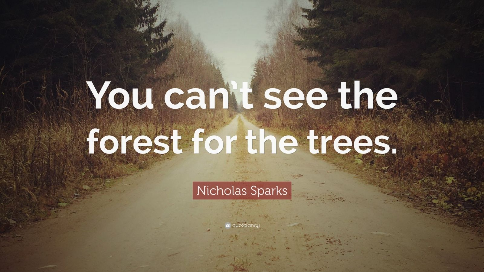 """Nicholas Sparks Quote: """"You can't see the forest for the trees."""""""