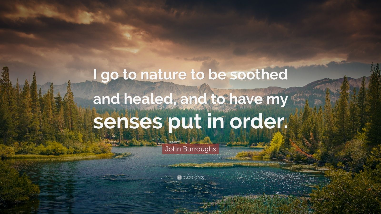 "John Burroughs Quote: ""I go to nature to be soothed and healed, and to have my senses put in order."""